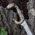 Assassin's Creed Odyssey Snake Handle Sword image