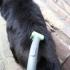 hair dog vaccum image