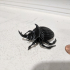 Beetle print image