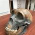 Neanderthal skull image