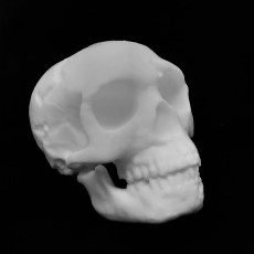Picture of print of Neanderthal skull