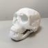 Neanderthal skull print image