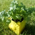 Sunny Self-Watering Planter image