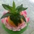Lotus flower image