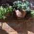 Tuscan Potbelly Wall Planter image