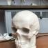 Skull cast of Dr. Johann Caspar Spurzheim image