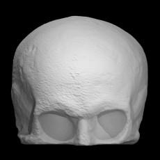 Skull Cast of Robert Burns