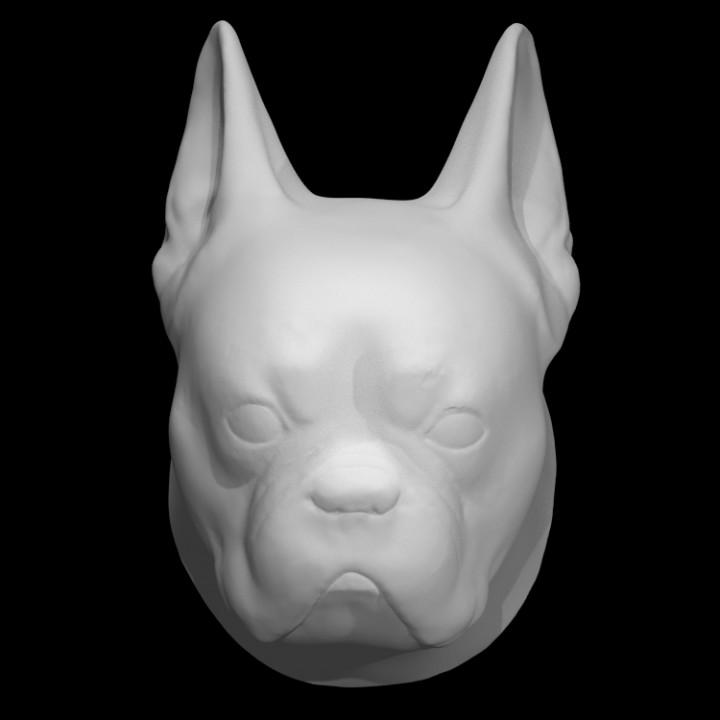 Head of a Bulldog