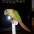 Desktop Small Bird Perch image