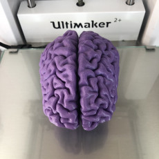 Picture of print of Brain