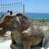 Hippopotamus image
