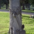 Tree Stump Monument at Mount Pleasant Cemetery image