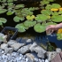 Natural Water Filter image