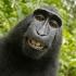 Monkey Selfie - Naratu image