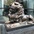 HSBC Lions image
