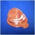 Animal Cell print image