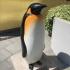 Penguin image