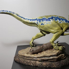 Picture of print of Velociraptor This print has been uploaded by Malcolm Fortier