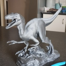 Picture of print of Velociraptor This print has been uploaded by Ethan Aberle