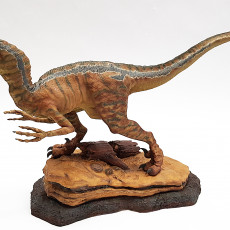 Picture of print of Velociraptor This print has been uploaded by Jan Matras