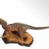 Velociraptor print image