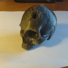 Picture of print of Vampire Skull This print has been uploaded by Konstantin Rumyantsev