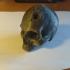 Vampire Skull print image