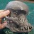 Pug skull image