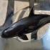 Orca image