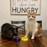 Cat Bowl image