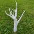 Old tree image