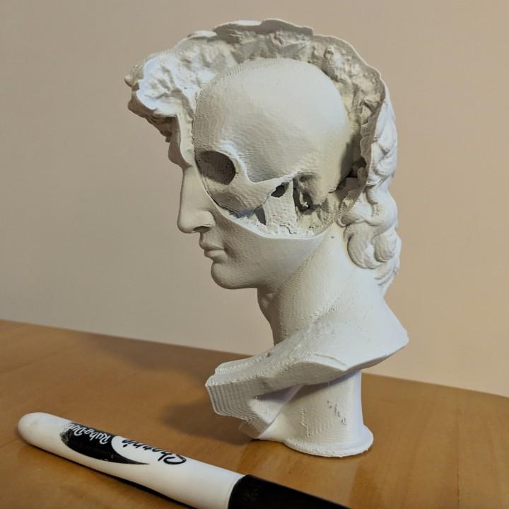 David's Cranium