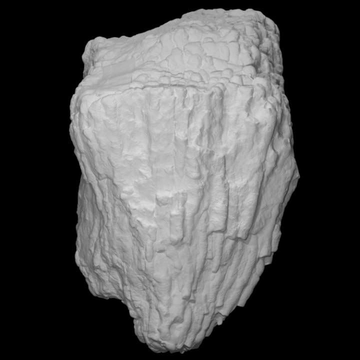 Coral - Entelophyllum