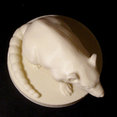 Picture of print of Rat
