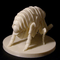 Picture of print of monster Flea