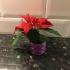 Flower Pot, Vase image