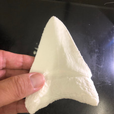 Picture of print of Megalodon fossil shark tooth