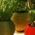 "Flowers pot ""stratoball"" image"
