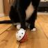 Cat Treat Ball Dispenser print image