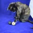 Cat Treat Ball Dispenser image
