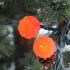 Christmas Light Toppers (Sindoh Contest Entry) image