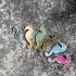 Seahorse brooch image