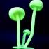 Glowing Mushrooms image