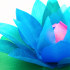 Water Lily (with a hidden secret) image