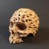 Skull of Vines image