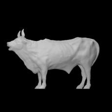 Bellowing Bull