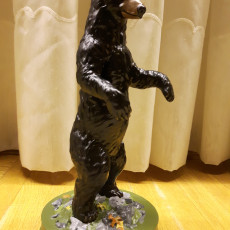 Picture of print of Standing Black Bear