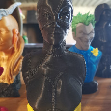 Picture of print of Catwoman bust