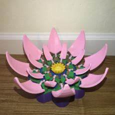 Lotus-Automata