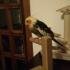 parrot holder image